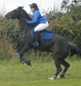 horse rearing at showjump